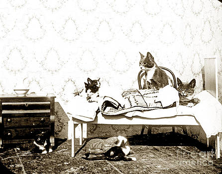 California Views Mr Pat Hathaway Archives - Bed time for Kitty cats Histrica Photo circa 1900