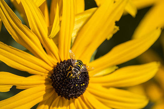 Bee 1 by Carl Christensen