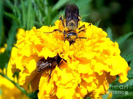 Bee and the Yellow Flower by Annette Allman