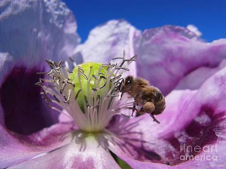 Bee At Work by Agnieszka Ledwon
