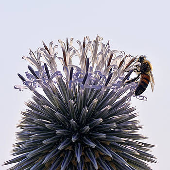 Bee at work... by Can Kalagoglu