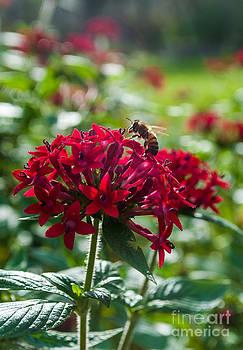 Bee at Work  by Denise Ellis