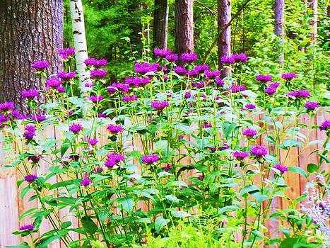 Bee Balm in Bloom by Fawn Whelahan