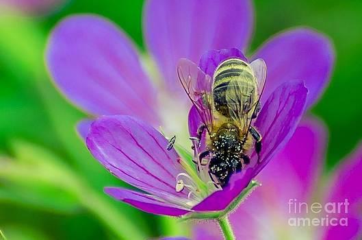 Bee by Debbie Patrizi