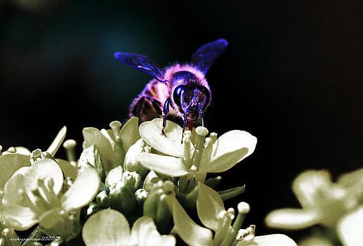 Bee by Enrique Rueda
