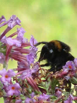 Bee Eye On Buddleia by Bernice Grundy