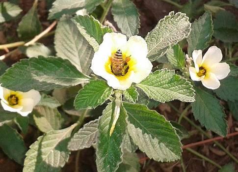 Bee by Glitter Cherry