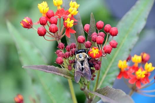 Bee in Abundance by David Earl Johnson
