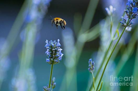 Bee in Blue by Beth Riser