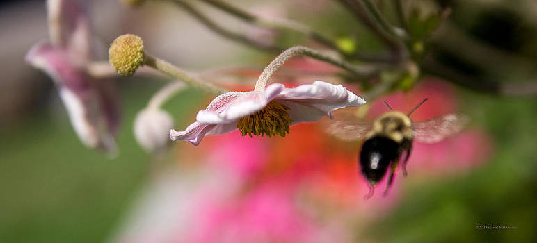 Bee in the Garden by Carol Hathaway