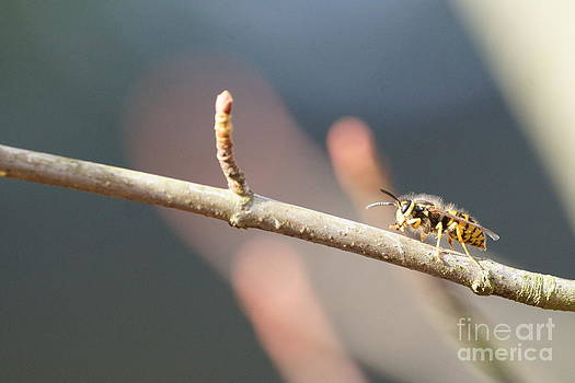 Bee-ing Cool by Walter Strausser
