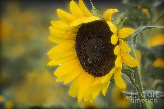 Cris Hayes - Bee Mine