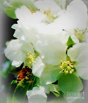 Gail Matthews - BEE MY BEE MY BABY