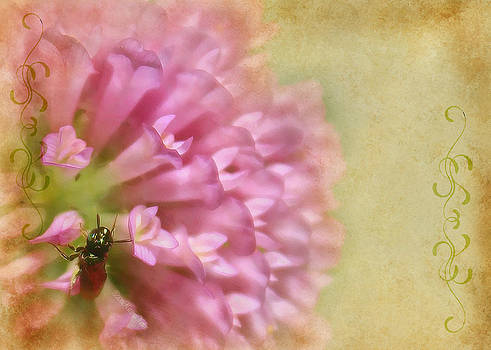 Bee On Clover by Kathy Nairn