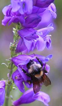 Bee on Flowers by Patricia Alexander
