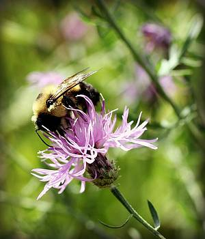 Bee on Purple Flower by Nicole  Lambert