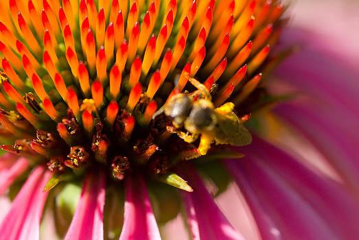 Devinder Sangha - Bee on sharp cones