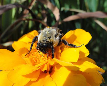 Sue Duda - Bee Pollenator 1