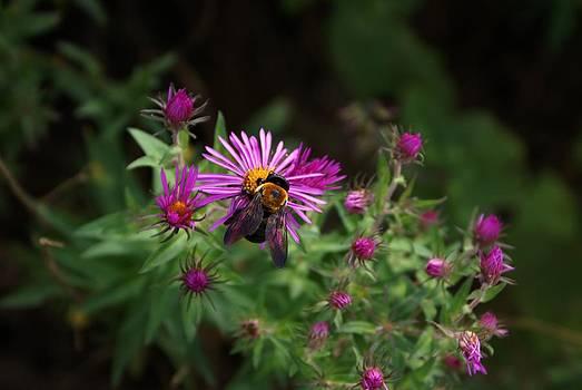 Bee Scene by Debbie May