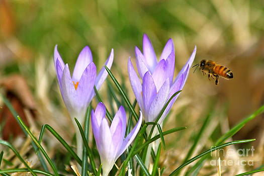 Bee Spring by Jay Nodianos