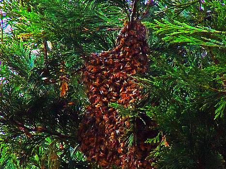 Bee Swarm by Steve Battle