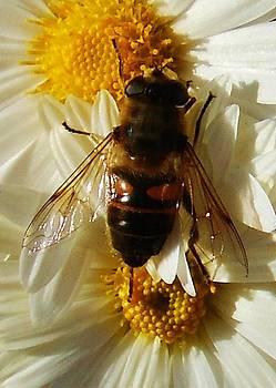 Bee-Tween Jobs by Alison Richardson-Douglas