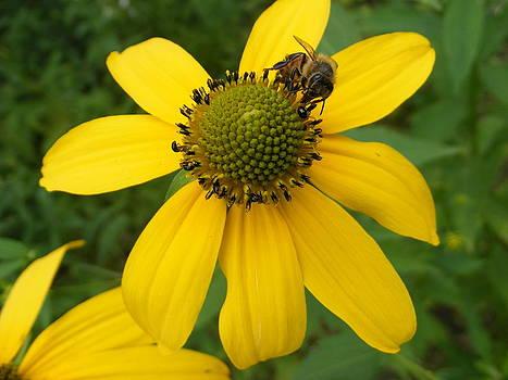 Melissa Lightner - Bee Yellow