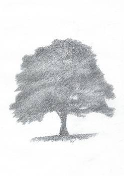 Beech Tree Drawing Number Three by Alan Daysh