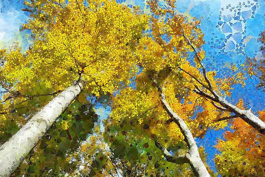 Beech Trees by Boguslaw Florjan