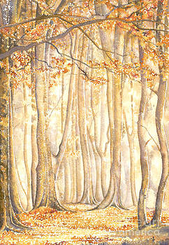 Beech Trees Sherwood Forest by David Evans