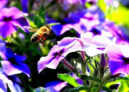 Bees At Work by Rebecca Adams