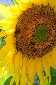 Bee's Bounty by Melany Raubolt