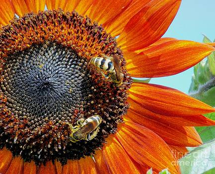 Bees Collecting Pollen by Annette Allman