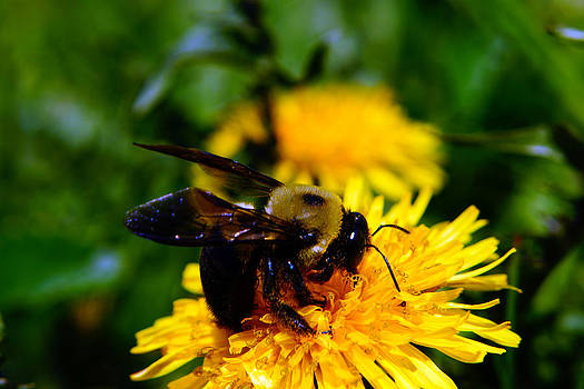 Bees Work by Douglas Hamilton