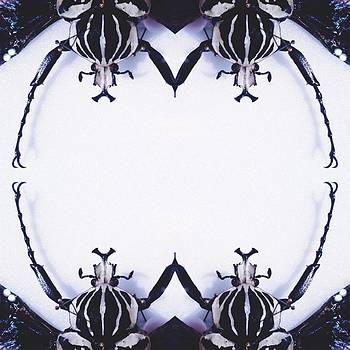 Beetle Ring by Chris Denman