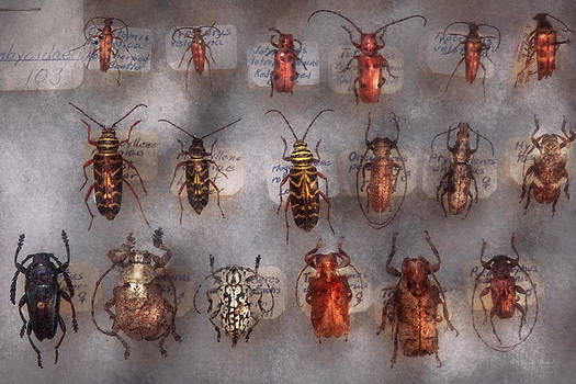 Mike Savad - Beetles - The usual suspects