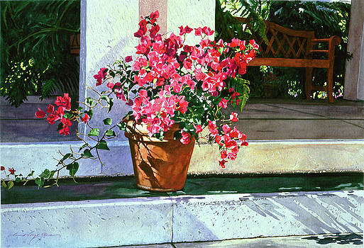 David Lloyd Glover - Bel-Air Bougainvillea Pot