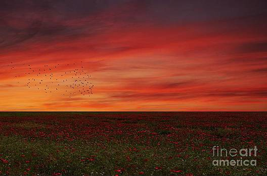 Bel tramonto by Lee-Anne Rafferty-Evans