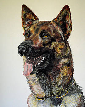 Belgian Malinois by Ann Marie Chaffin