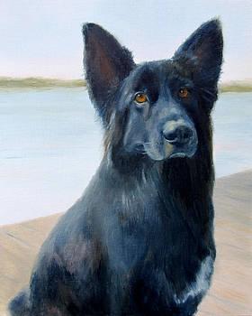 Belgian Shepherd by Beth Johnston