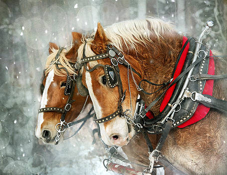 Belgian Snowflakes by Judy Neill