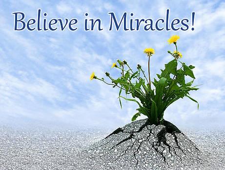 Dreamland Media - Believe in Miracles