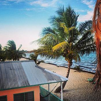 #belize #palmtree #beach #nature by Julia Goldberg