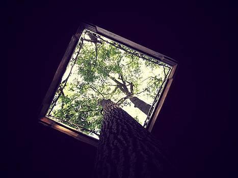 Below The Tree Tops by Dianne Furphy