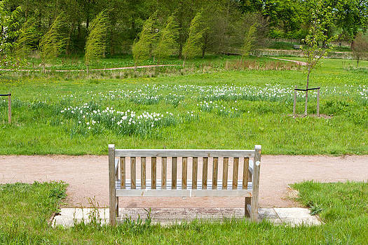 Fizzy Image - bench in an English Countryside scene