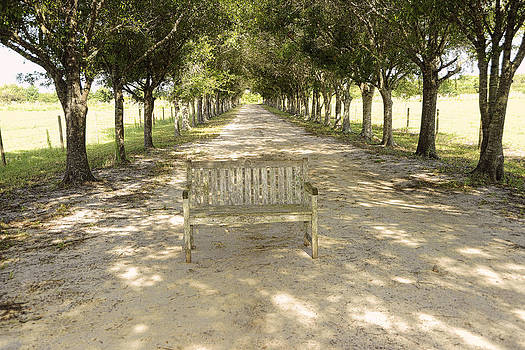 Bench in Driveway by Keith Lovejoy