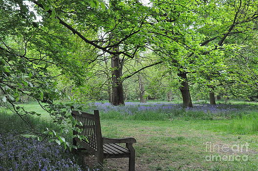 Bench in the Woodland Garden in Kew by Tanya  Searcy