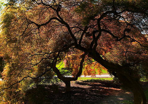 Beneath The Japanese Maples by Scott Fracasso