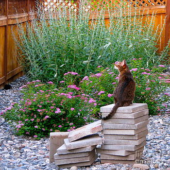 Bengal Cat Reigning over the Garden by Phyllis Kaltenbach