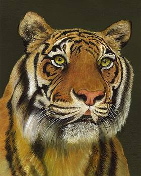 Bengal Tiger by Dana Spring Parish